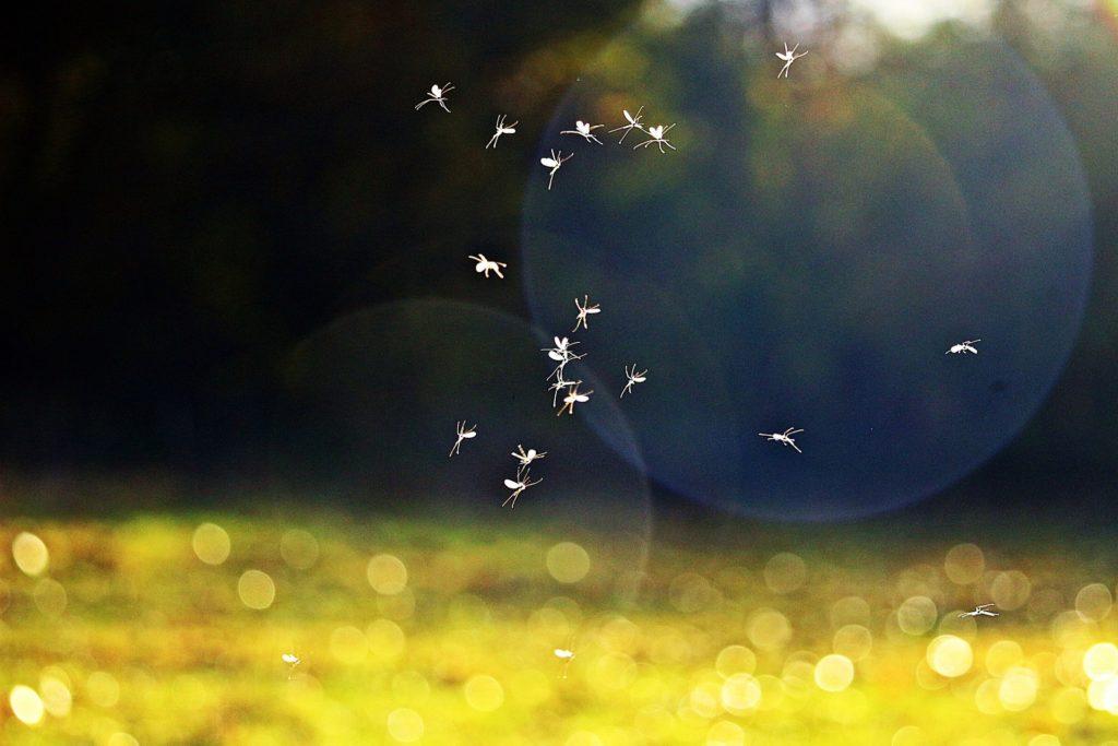 rimedi zanzare alontan